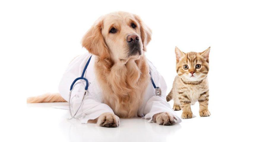 pes-kočka-doktor